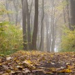 Foggy autumn day — Stock Photo