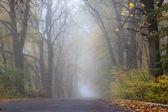 Foggy autumn day — Stock Photo