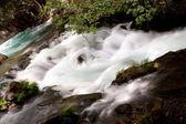 Hermon Stream nature reserve banias — Stock Photo