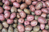 Eyes on Red Potatoes — Stock Photo