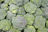 Bunches of Broccoli — Stock Photo