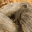 Twisted Tree Stump against Sandstone - Stock Photo
