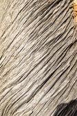 Textura de log — Foto Stock
