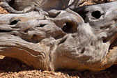 Twisted Stump — Stock Photo