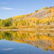 Stock Photo: Fall Foliage Reflections