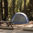 Redwood Forest Campsite — Stock Photo
