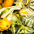Exotic Fall Gourds — Lizenzfreies Foto