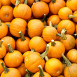 Jack-o-Lanterns — Stock Photo