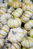 White Striped Gourds — Stock Photo