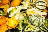 Exotic Fall Gourds — Stock Photo