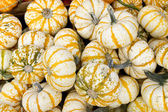 Harvest Gourds fo Halloween — Stock Photo