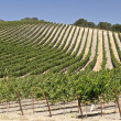 The Hills of Paso Robles — Stock Photo