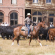 Downtown Cattle Drive - Stock Photo