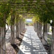 Trellis in a Vineyard — Stock Photo