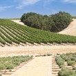The Heart of California Wine Country — Stock Photo