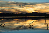 Desert Wetlands Sunset — Stock Photo