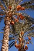 Palmiye ağaçları tarihte — Stok fotoğraf
