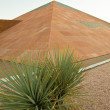 Yucca Plant and Pyramid — Foto Stock