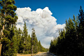 Wildfire Ahead — Stock Photo