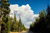 Wildfire Ahead — Stock Photo