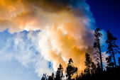 Yellowstone Wildfire — Stock Photo
