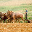 Stock Photo: Amish Farmer and Plow Horses