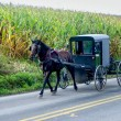 Stock Photo: Amish Buggy