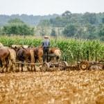 Traditional Amish Farming — Stock Photo #24078285
