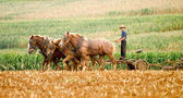 Amish Farmer and Plow Horses — Stock Photo