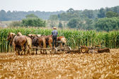 Traditional Amish Farming — Stock Photo