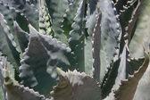 Nature's Tangles — Stock Photo