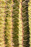 Cactus Spines Close Up — Stock Photo