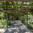 Arbor of Grape Vines — Stock Photo