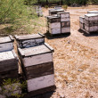 Beehives at Work — Stok fotoğraf