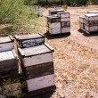 Beehives at Work — Stock Photo