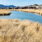 Bill Williams Wetlands — Stock Photo #40263831
