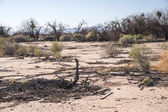 Arid Desert Scrub — Stock Photo