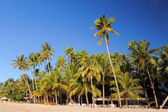 Palm trees and sand on the beach of the island of Bohol, Philippines — Stock Photo