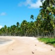 Paradise Brazilian Beach — Stock Photo