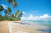 Praia do Forte, Salvador de Bahia state, Brazil. — Stock Photo