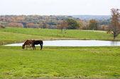 Farm Animals — Stock Photo