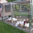 Chicken coop — Stock Photo #25860339