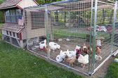 Chicken coop — Stock Photo