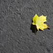 Autumn Leaf — Stock Photo #31513065