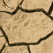 Animal footprints in dried earth — 图库照片