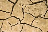 Cracks in dry soil — Stock Photo