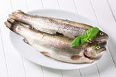 Fresh trouts — Stock Photo