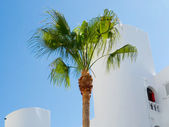 Palm tree in front of whitewashed house — Stock Photo