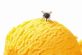 Fly on ice cream — Stock Photo