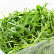 Arugula leaves - Stock Photo